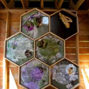 nouveaute : ruche geante artistique