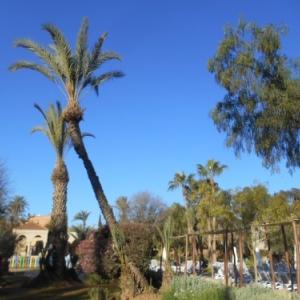 iberostar palmeraie marrakech