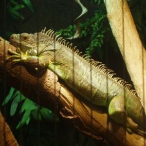 blankenberge - serpentarium