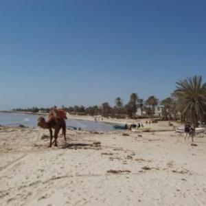 Djerba, l'île tunisienne aux sables d'or