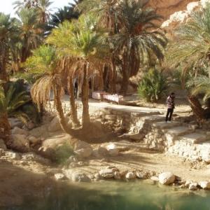 oasis de montagne - chebika
