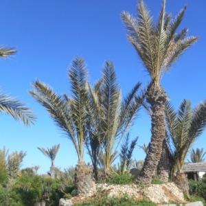 Djerba, l'île d'Ulysse et des lotophages