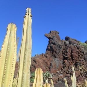 jardin de cactus