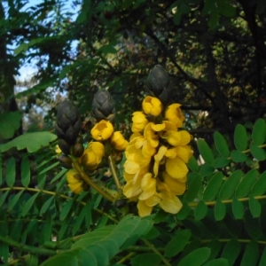jardin botanique funchal