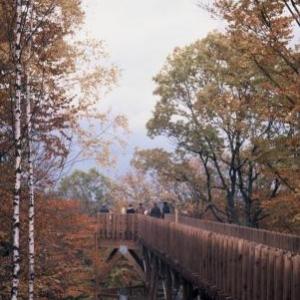 Passerelle cime des arbres