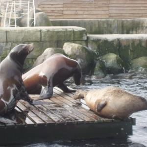 blankenberge - sealife
