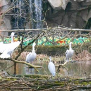 anvers - zoo