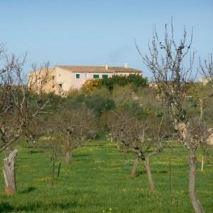 """Mallorca, """"l'île boisée"""""""