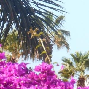 Lanzarote, la magie canarienne du noir, du blanc et du bleu