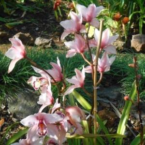 la jardin fleuri