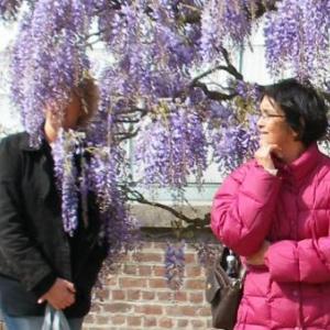 Le GSARA aux serres de Laeken, le 4 mai 2010: rien de mieux pour se voiler la face