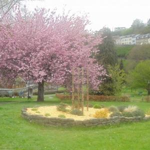 Houffalize. Minigolf.  Cerisier du Japon en fleur. En juin, les boules de neige. In juni, de sneeuwballen.