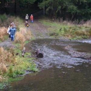 le ruisseau entre Bonnerue et Mabompre