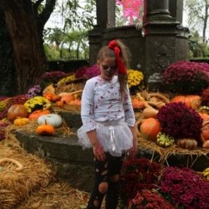 Neuf nocturnes pour Halloween à Pairi Daiza !