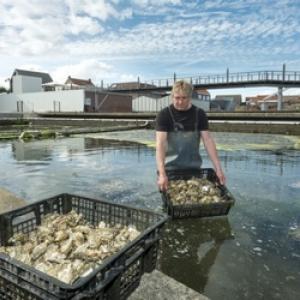 Il est temps de programmer votre escapade en Zélande, car la saison des huîtres arrive et les moules sont au meilleur.