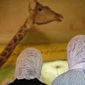 """""""Waiting for Girafles"""""""