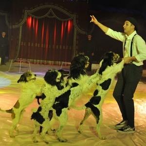 Julien Horwood (Belgique) et ses chiens de toutes races