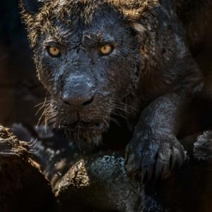 "(c)""European Wildlife Photographer of the Year""/""AVES"""