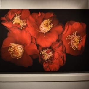 """Une approche photographique par scanner (c) Martine Narbone/Ph.:""""Animation Citadelle"""""""
