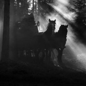 """Le Visage"" (Ingmar Bergman)"