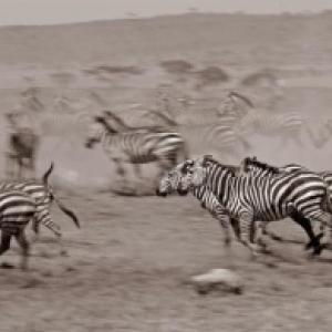 Parc National du Serengeti, en Tanzanie (c) Christine Moulia