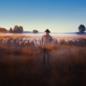 """""""Sheep Hero"""" (c) Ton Van Zantvoort"""