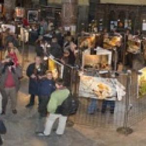 """""""Expos Photos Aves"""", dans le Vieux Namur, du 19 au 22 Septembre"""