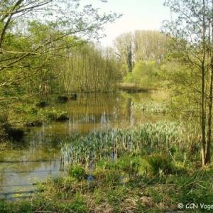 "Reserve naturelle (c) ""CCN Vogelzang CBN"""