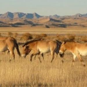 "En Mongolie (c) ""Assciation Takh"""