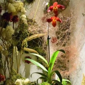 orchidee-5420