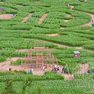 Labyrinthe de Barvaux-7629