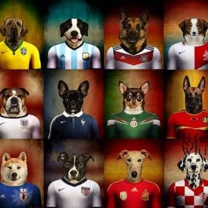 concours photos de chien
