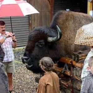 indian festival 2011 de la ferme des bisons de Recogne