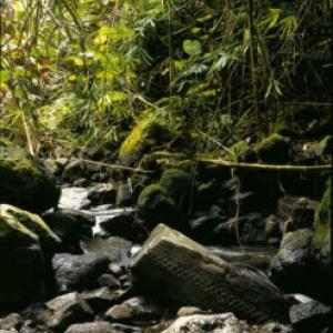 In Situ (c) Jean-Paul Forest