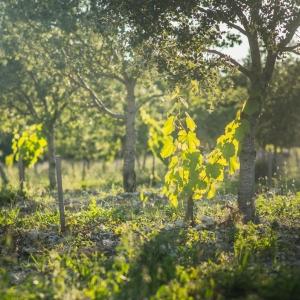 L'agroécologie, une philosophie qui nourrit le corps et l'esprit