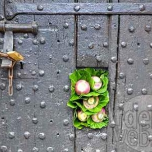 Belgian flower arrangement society -photo 127