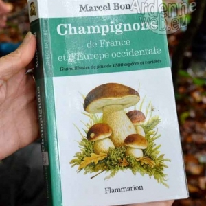 Promenade champignons-1089