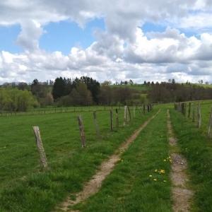 Balade - Découverte du sentier castor « Prés de la Lienne »