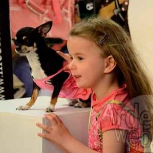 concours du plus beau chien du monde - video 6
