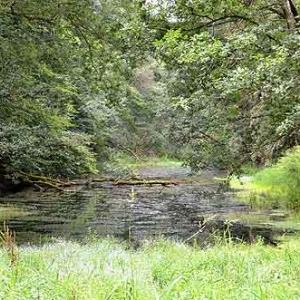 Canal de Bernistap - 8942