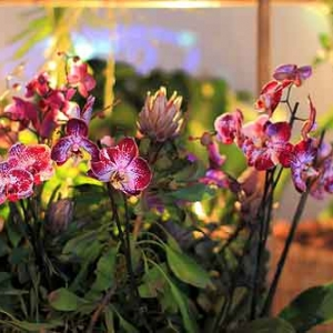 LIEGE du 28 mars au 20 mai, le monde secret des orchidees