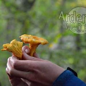 Promenade champignons avec BARNABE EK--1081