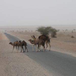 Rencontre dans le desert de M'Hamid