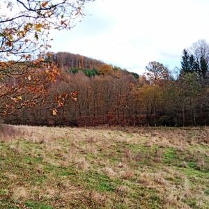 La réserve naturelle de la Warchenne