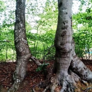 Fantaisie de la nature