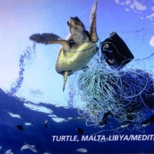 Une tortue victime de la pollution plastique