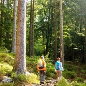 Randonnee pedestre ( Photo Eifel Tourismus )