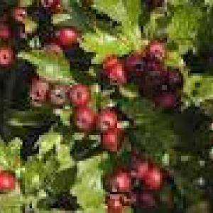 STAGES d'initiation à la SURVIE et CUEILLETTE de plantes sauvages, légumes & fruits oubliés