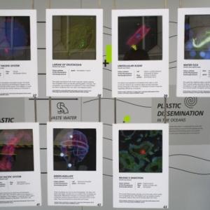 Microorganismes victimes de la pollution plastique