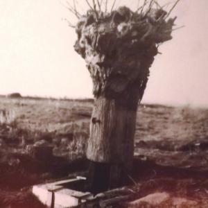 Un leurre... le sniper se dissimulait dans le tronc